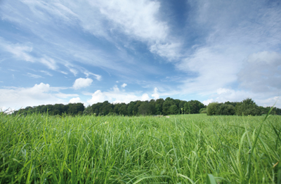 Dinitrol Varmvaxbehandling - Skyddar mot Rost och värnar om miljön